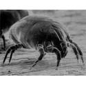 Insecticide anti-acariens anti-poux
